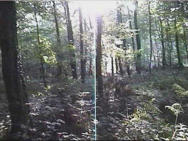 "Still from 8mm film ""ATTACK/ATTACKED"", camera 1, 1996"